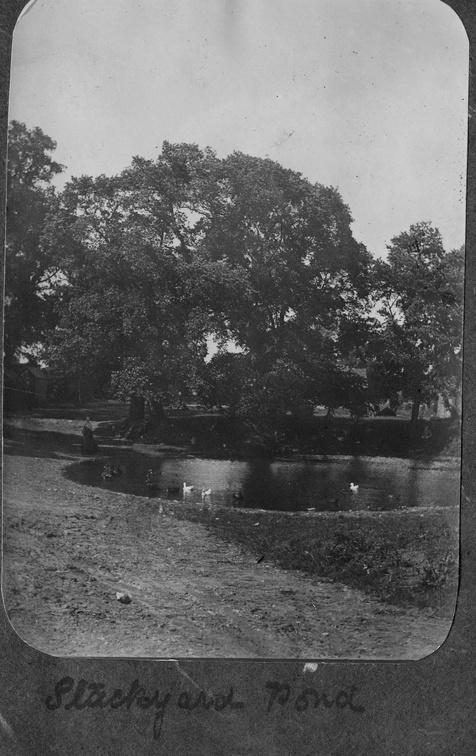 Stackyard Pond, Church Farm