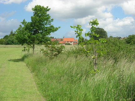 Playing field, Tom Holmes' memorial trees, June 2007