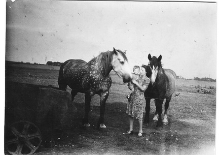 1947 - The farm horses at Station Farm, Stanhoe.