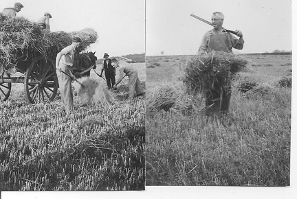 1930's - Two  photos of harvest at Station Farm, Stanhoe