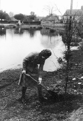 Olga Ransom planting a WI beech tree by the Pit on 16 March 1980, marking the 60th anniversary of Stanhoe & Barwick WI in 1979