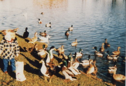 Feeding the ducks at The Pit