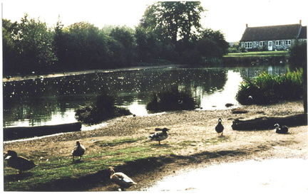 the pond and Flint Cottage