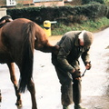 Dick Seaman shoeing Jeff Taylor's horse which cast a shoe opposite the Post Office. Jeff's hand at left of photo.