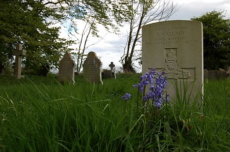 gravestones and bluebells