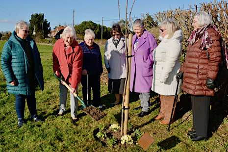WI members in warm coats with spades and maple sapling