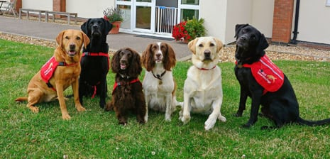 Six medical detection dogs looking cute
